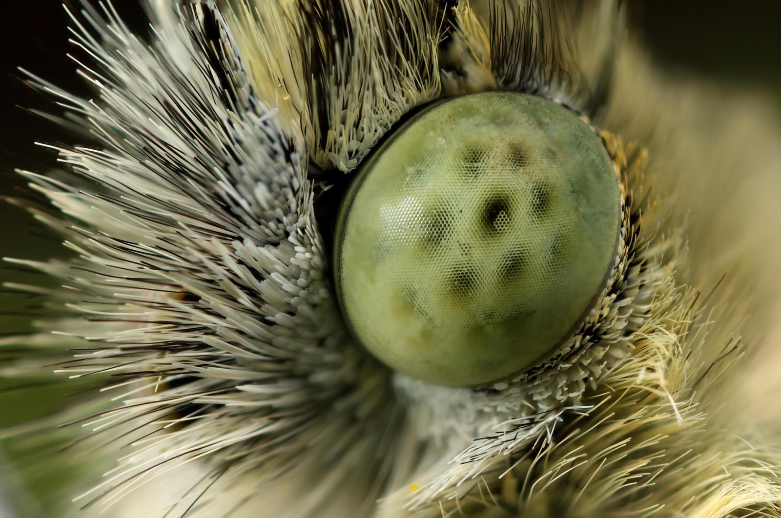 butterfly eye at 5X by macrojunkie