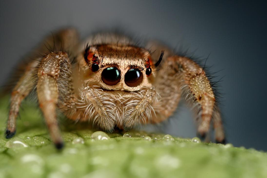 Jumping Spider 1 By Macrojunkie On Deviantart