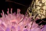 butterfly on a flower by macrojunkie