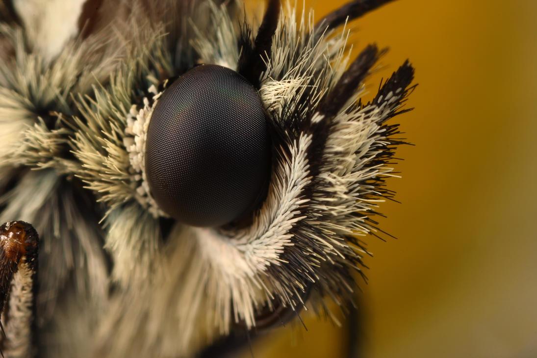butterfly 5x by macrojunkie