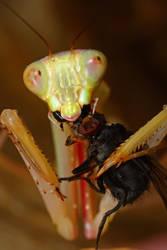jade likes her flies by macrojunkie