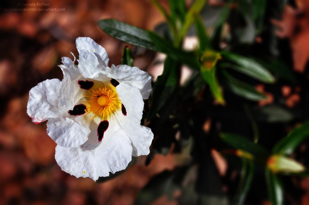 FLOWER  DanielaRichter by DanielaRichter