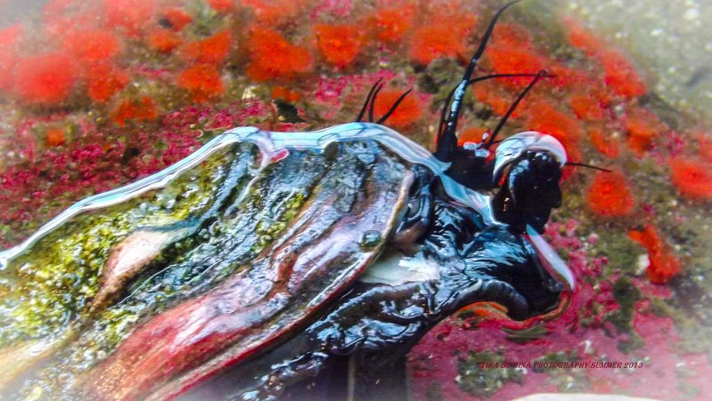 amazing sea creatures by TinaBoBinaArt on DeviantArt