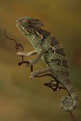 veiled chameleon 4 by bugalirious-STOCK