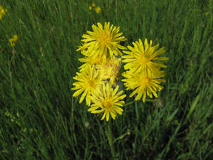 unknown Yellow I