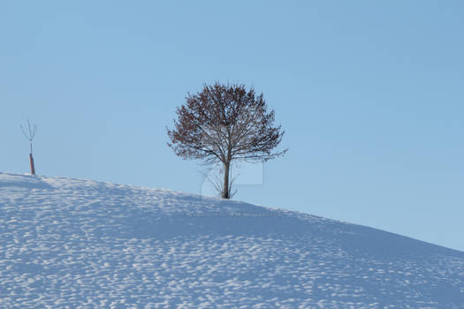 Alone at wintertimes