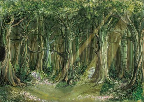 Deep forest daylight