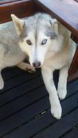 Meet Freyja!
