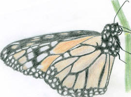 Monarch Butterfly by a-tin-sheep