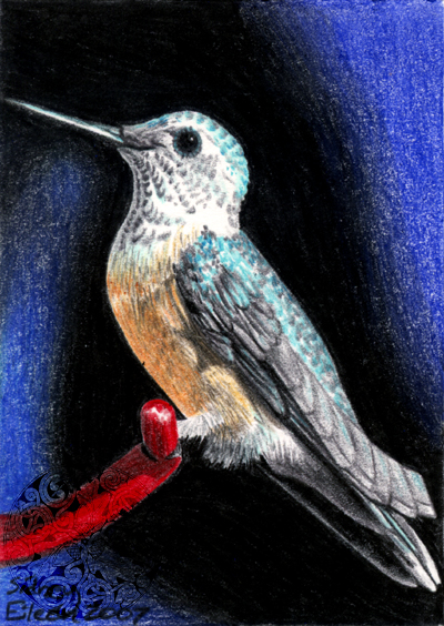 Hummingbird ACEO by sidneyeileen