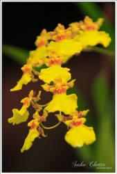 orkidlah by acidpilot