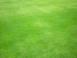 Green grass by Gardek