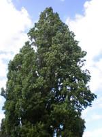 Tree by Gardek