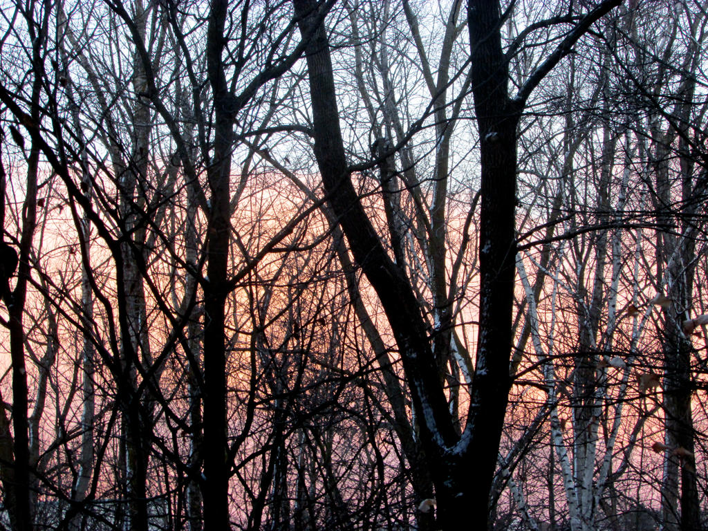 Colourful Sky Between The Trees By Awesomepossum3211 On