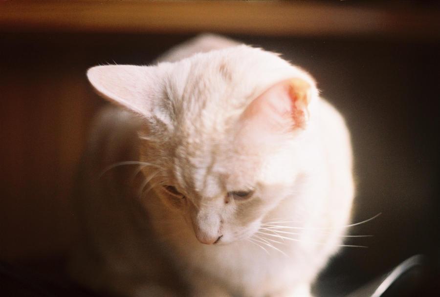 cat cat cat by LittleOluna