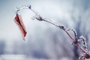 Frozen nature 2 by Dybcio