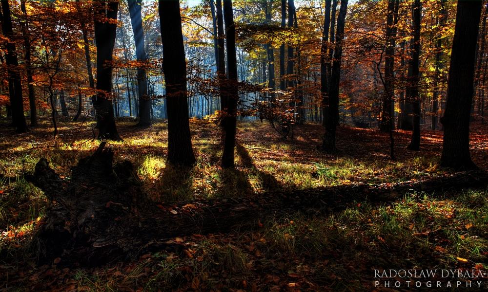 Forgotten forest by Dybcio