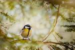 Bird by Dybcio