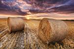 Path full of hay