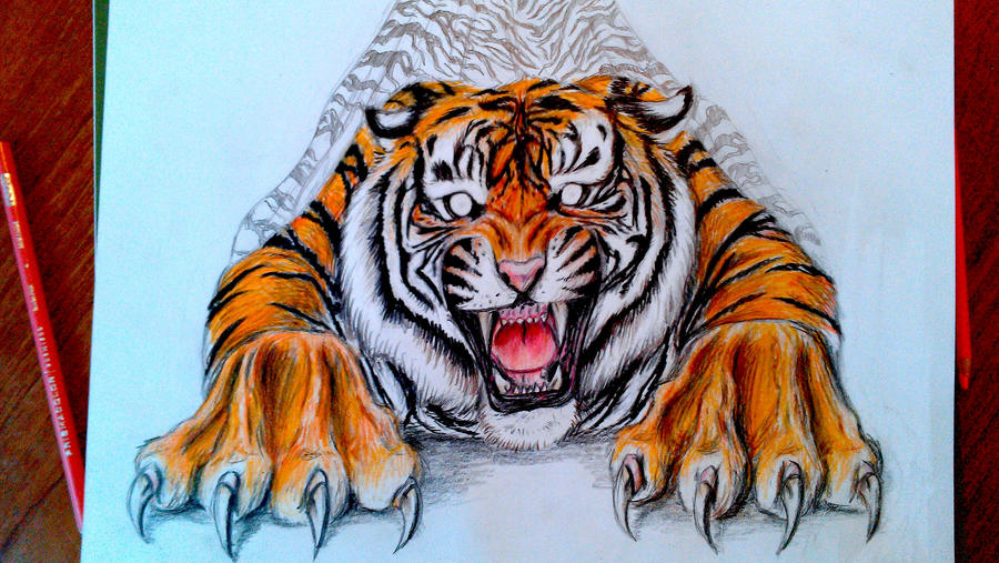 WIP 3 Tiger Coloured CloseUp by LuckyIrishEyes on DeviantArt