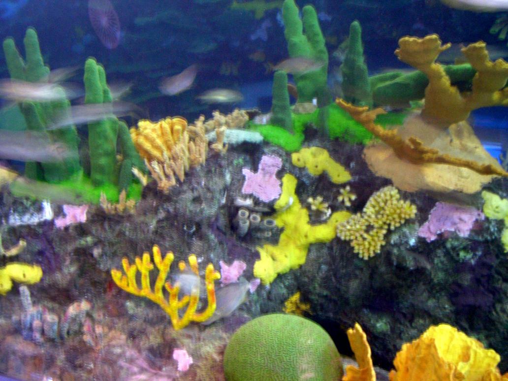 Coral at Ripley's Aquarium by dhunley