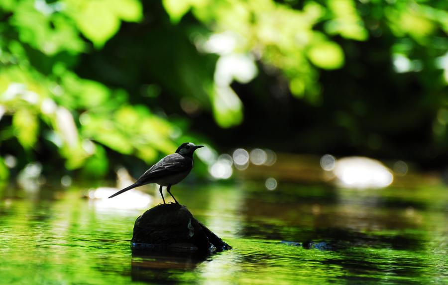 just bird by caguyanik