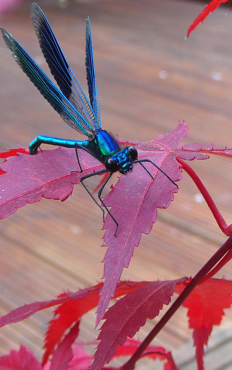Poor Dragonfly by ginas-cakes