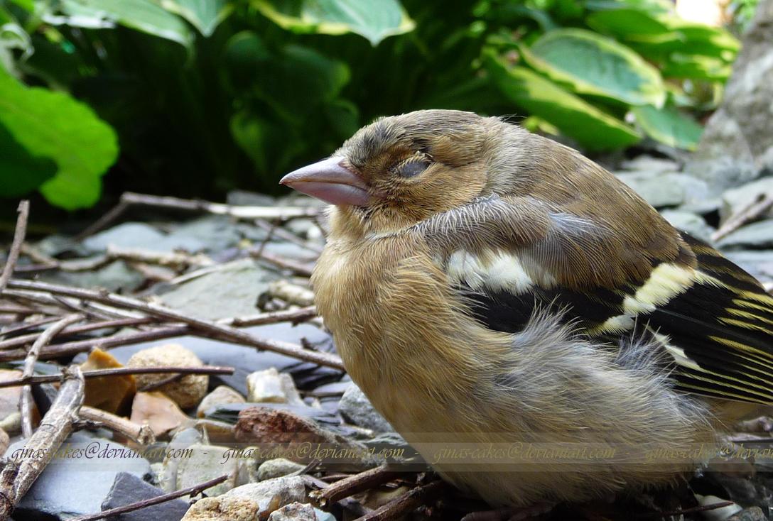 Resting Birdie 2 by ginas-cakes