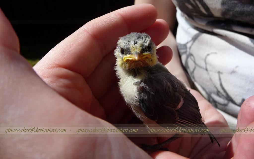 Angry Bird! by ginas-cakes