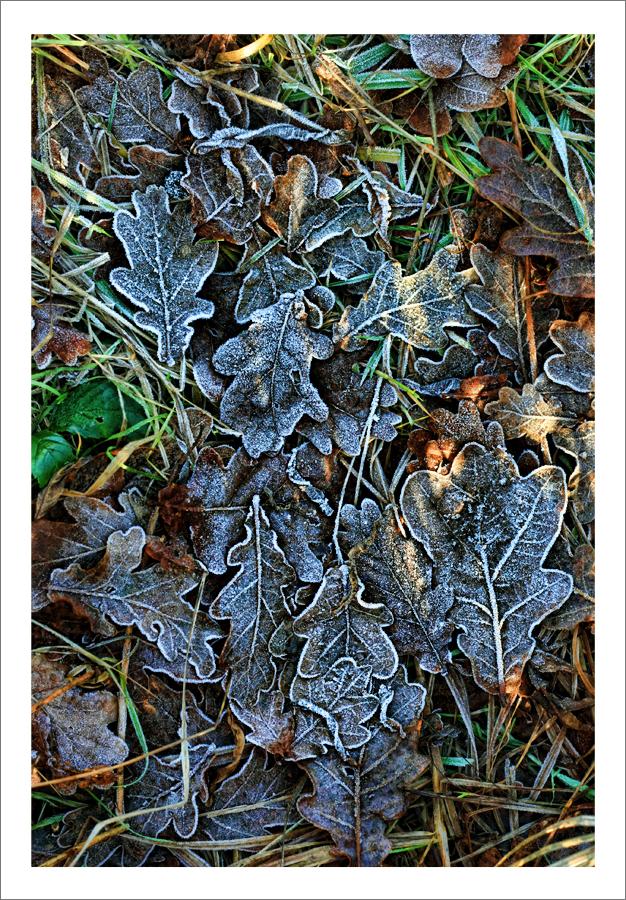 IMAGE: http://fc07.deviantart.net/fs71/f/2011/009/b/6/frosted_leaves_by_neoweb-d36tkz6.jpg