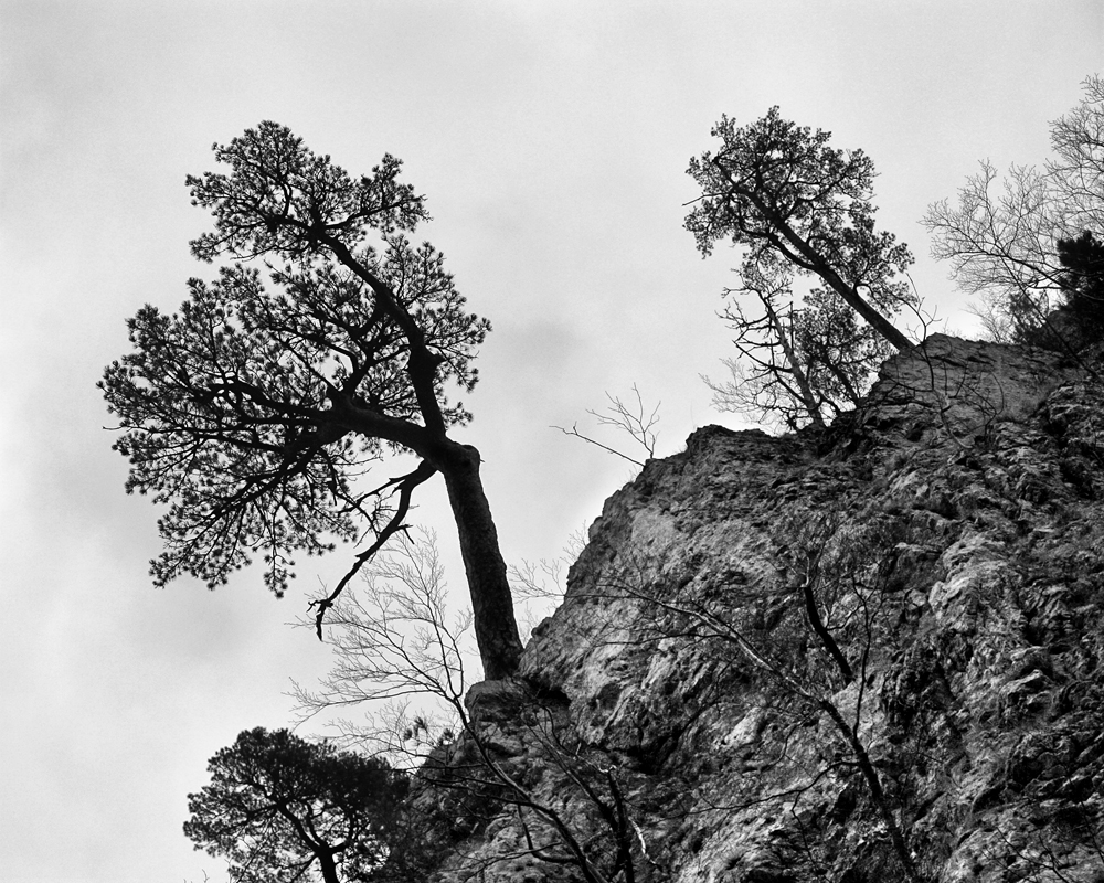 Trees on a Hill by neoweb