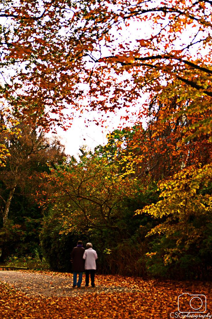 november walk by ineos