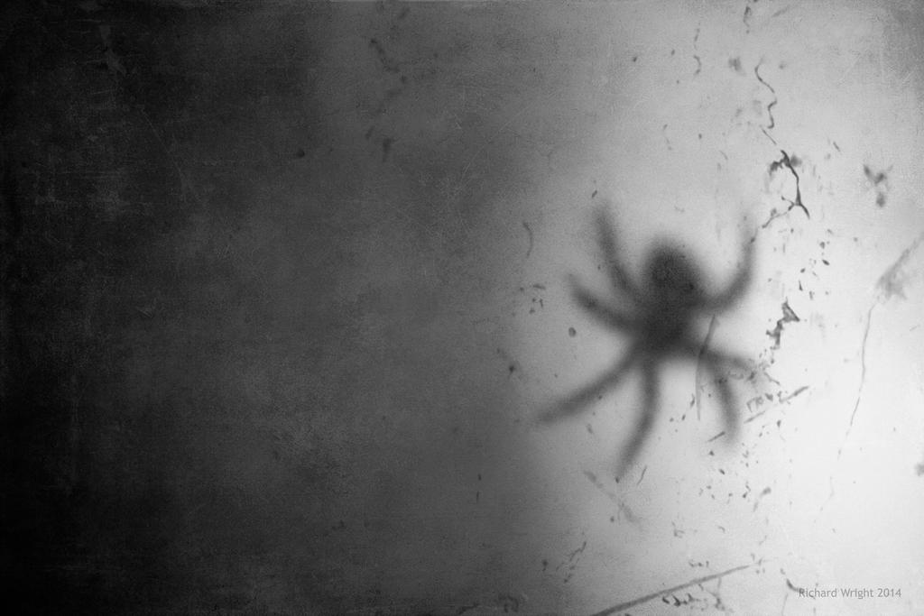 Spider Blur by ArtmasterRich