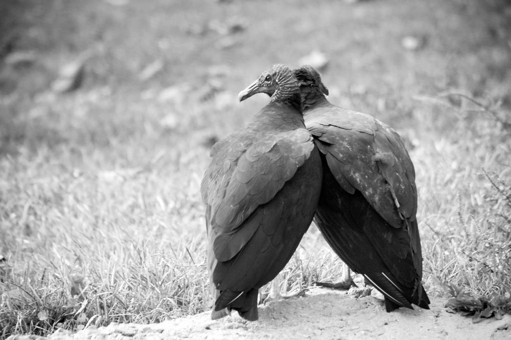 Feathered Lovers by ArtmasterRich