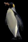 Penguin by Minia4