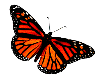Butterfly 2s by Minia4