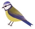 BLUE Tit sm by Minia4