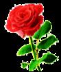 Rose 2a by Minia4