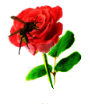 Rose, Hornet by Minia4