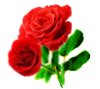 Roses by Minia4