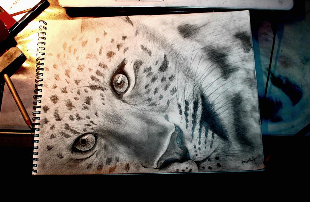 Leopard Pencil Drawings Leopard - pencil drawi...