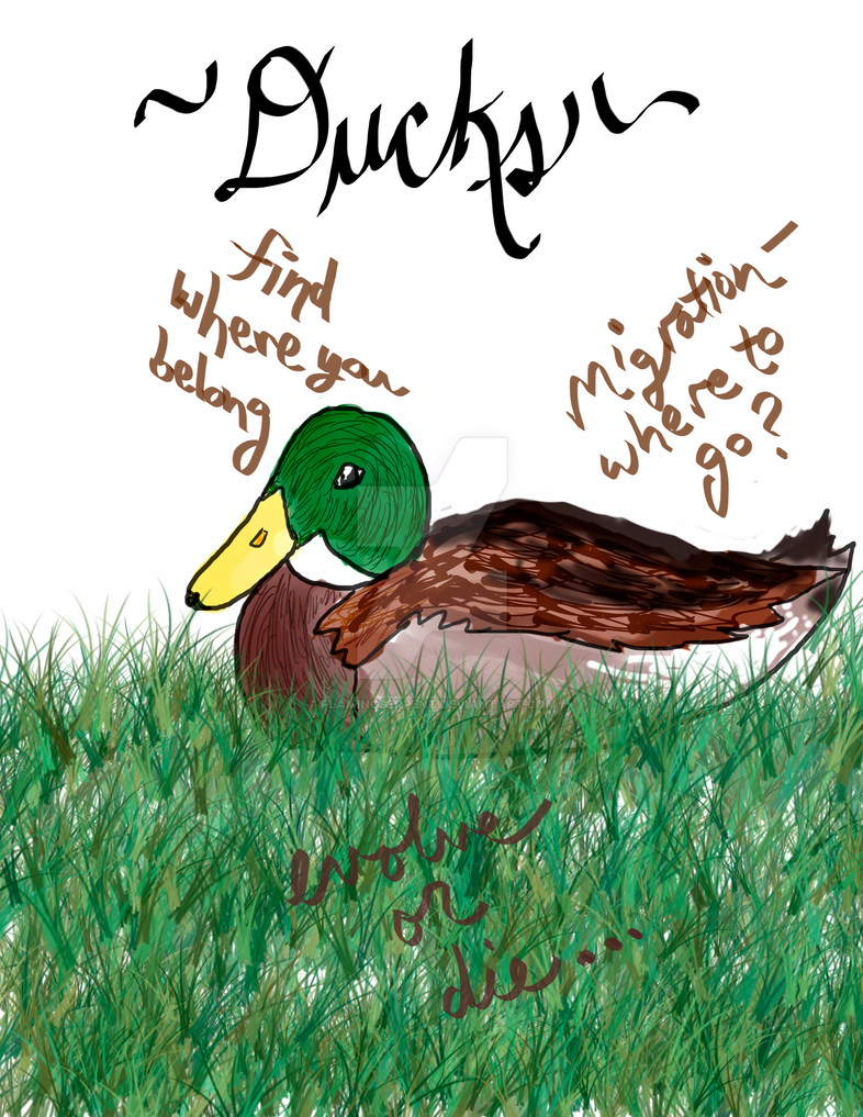catcher in the rye ducks