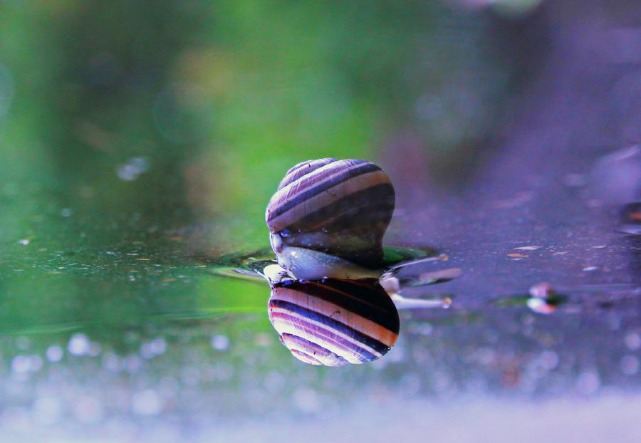 Swim by Shadoisk