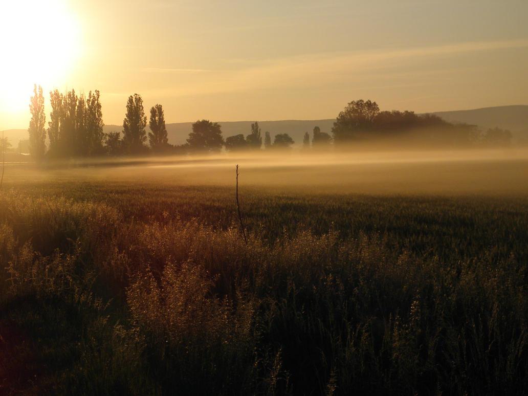 Fog of the dawn by Sidafecske