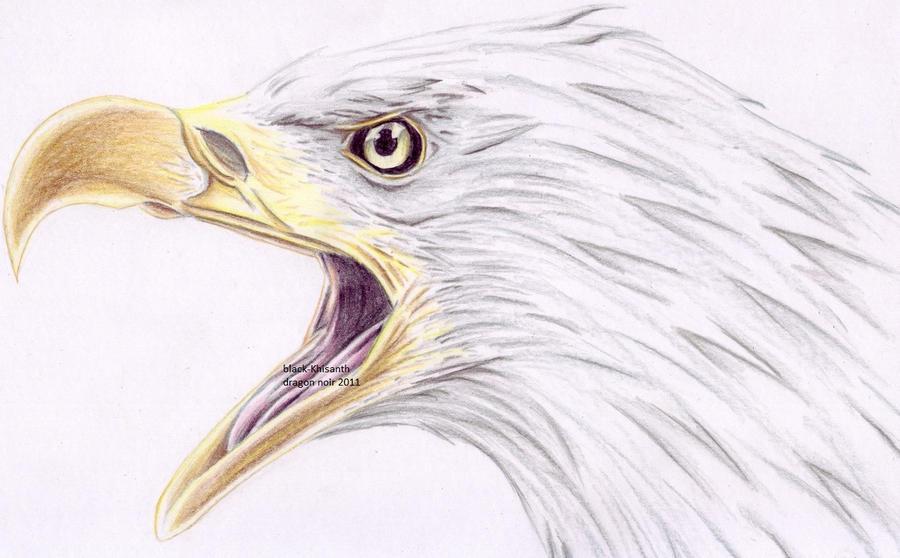 Tete d 39 aigle by black khisanth on deviantart - Dessin de aigle ...