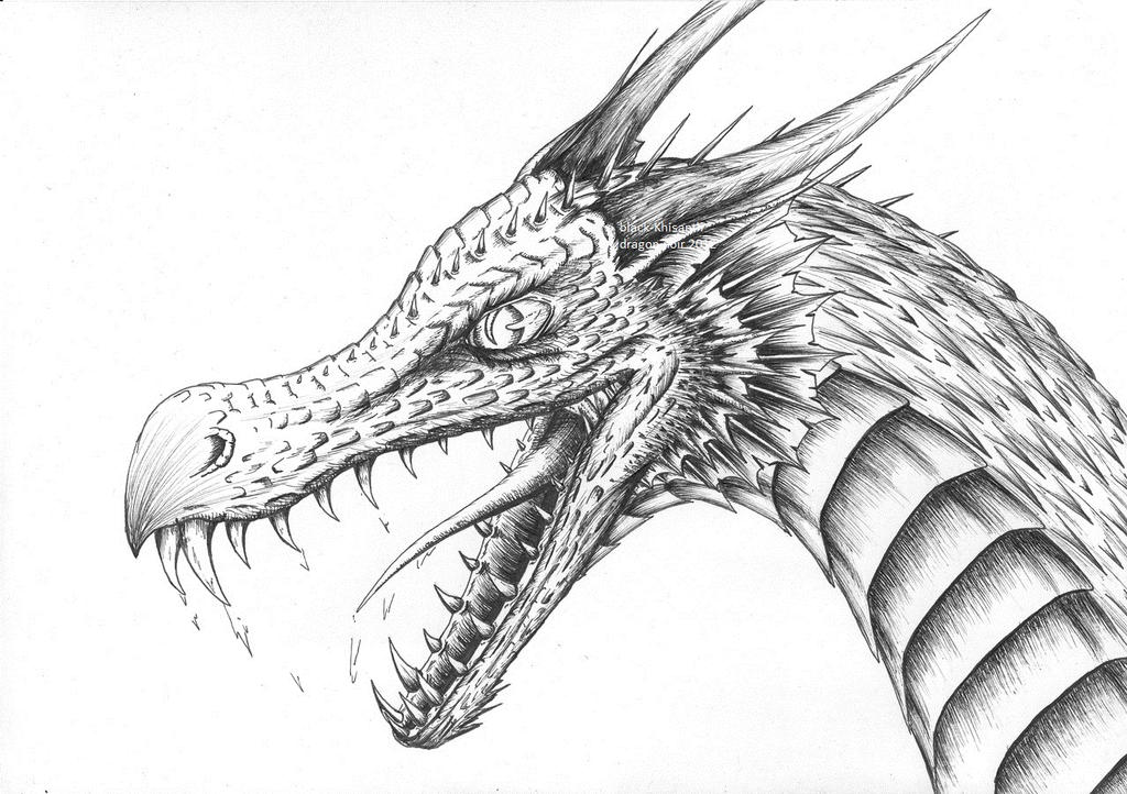 Tete de dragon by black khisanth on deviantart - Dessins dragon ...