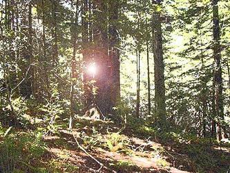 Hiking in the Woods by Bradon-Rekai