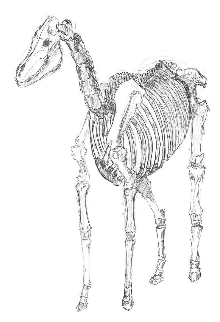 study of the centaur