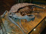 Sarcosuchus Skeleton by Lord-Imhotep