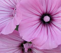 La pinks by Nadia2003
